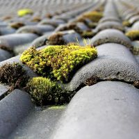 Why Roof Moss Removal Is So Important to the Integrity of a Home